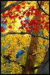 vancityallie_leaves_photo_vancouver