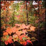 fall_leaves_140925